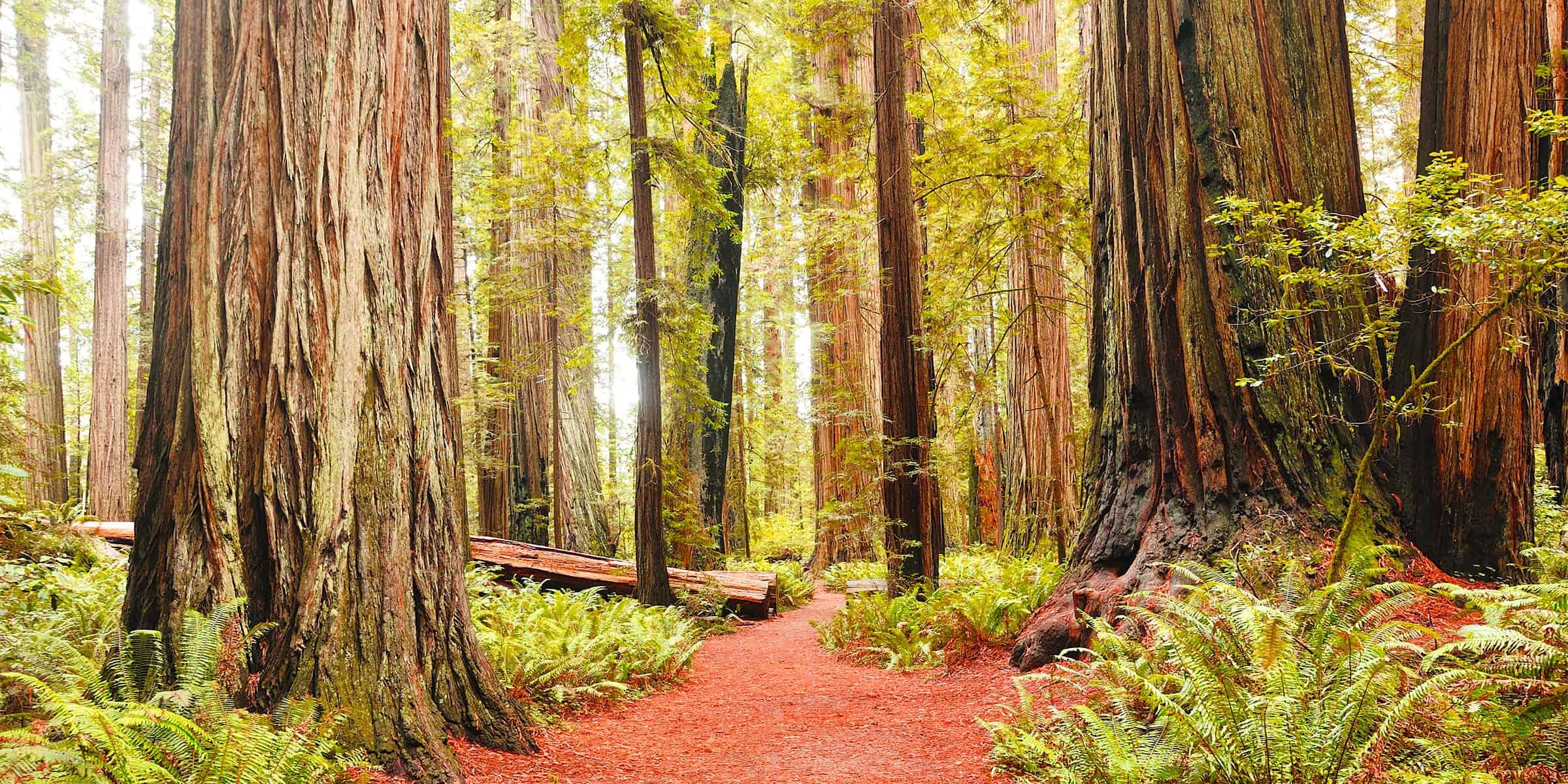 Redwood Park - Arcata, CA